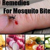 17 Accueil recours pour les piqûres de moustiques