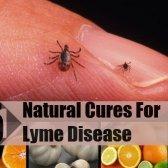 5 remèdes naturels pour la maladie de lyme