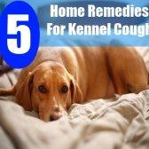 5 remèdes efficaces à domicile pour la toux de chenil