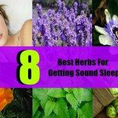 8 meilleures plantes pour obtenir un sommeil profond