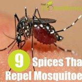 9 Différents types d'épices qui repoussent les moustiques