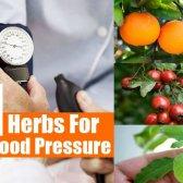 Top 11 des herbes pour une pression artérielle basse