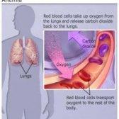 Remède naturel pour l'anémie