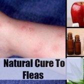 Top 5 des remèdes naturels pour les puces