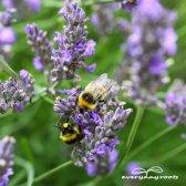 2 façons d'éviter les pesticides et les engrais commerciaux jamais
