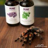 Comment garder les araignées hors de votre maison avec des huiles essentielles