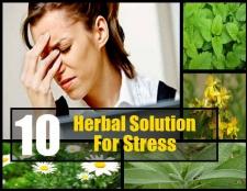 10 solutions à base de plantes apaisantes pour le stress