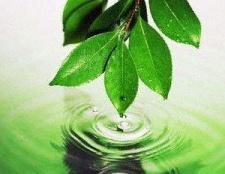6 façons étonnants de l'utilisation de neem feuilles
