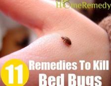 11 remèdes à la maison pour tuer les punaises de lit