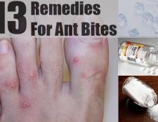 13 Accueil recours pour les piqûres de fourmis