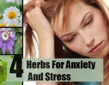 4 herbes pour l'anxiété et le stress