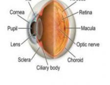 5 meilleurs vitamines pour la santé oculaire