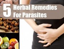 5 remèdes à base de plantes pour les parasites