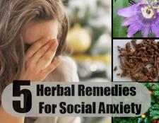 5 remèdes à base de plantes pour l'anxiété sociale