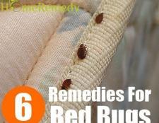 6 Les remèdes maison pour enlever les punaises de lit de votre maison