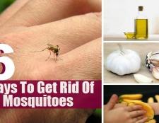 6 façons de se débarrasser des moustiques