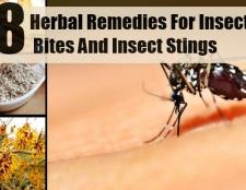8 meilleurs remèdes pour les piqûres d'insectes et les piqûres d'insectes