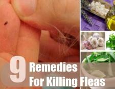 9 Accueil recours pour tuer les puces