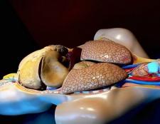 Troubles de la vésicule biliaire (calculs biliaires)