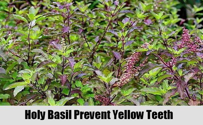 5 rem des base de plantes pour les dents jaunes - Plante a la gomme ...