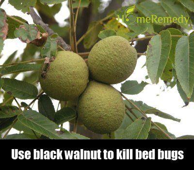 11 rem des la maison pour tuer les punaises de lit - Comment tuer punaise de lit ...